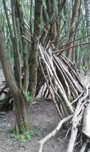 A small den in the woods